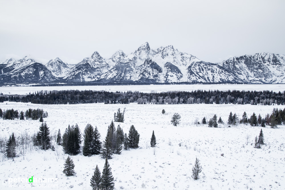 I Love Big Tetons Too